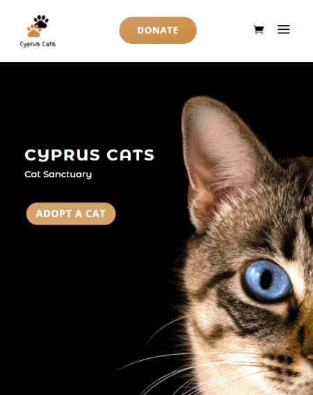 Cyprus Cats.com Image - By Virtualeap Web Design